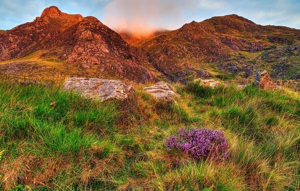 Картинка green, grass, mountains