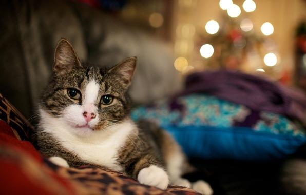 Картинка кошка, огоньки, cats wallpapers, обои с кошками