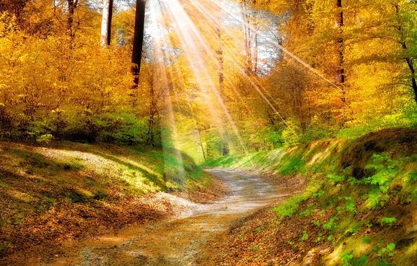 Картинка дорога, осень, лес, лучи, природа, красиво, солнца