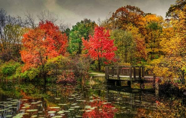 Картинка осень, деревья, мост, природа, парк, река, фото