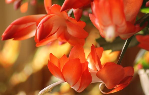 Картинка лето, макро, цветы, природа, красота, ярко, macro