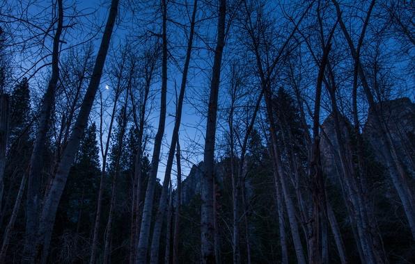 Картинка небо, деревья, горы, ночь, скалы, луна, месяц