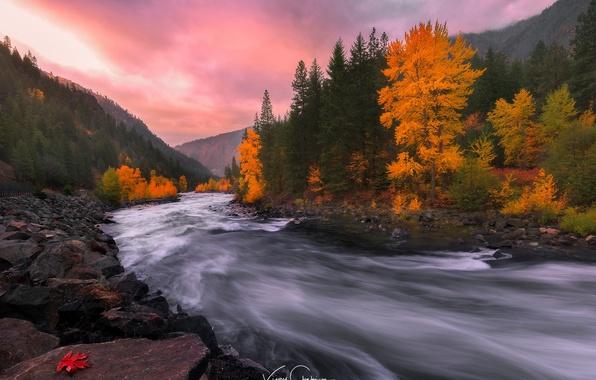 Картинка осень, лес, природа, река, камни, скалы, краски, поток