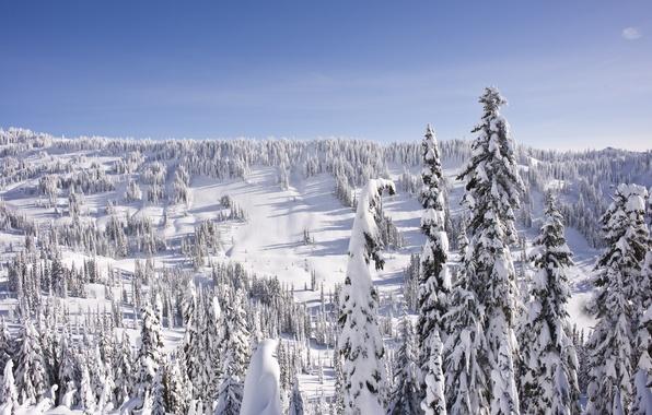 Картинка зима, лес, небо, снег, пейзаж, холмы, елка, ель, горизонт, мороз