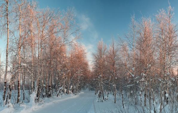 Картинка зима, снег, берёзы