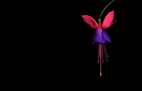 Картинка цветок, свет, обои, тень, лепестки, экзотика