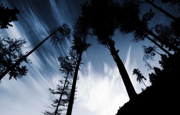 Картинка небо, облака, деревья, стволы, вечер, холм, тени, силуэты, бугор