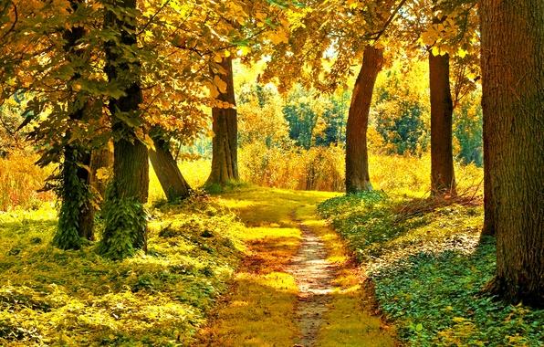 Картинка осень, лес, трава, листья, солнце, деревья, ветки, природа, желтые, зеленые, тропинка