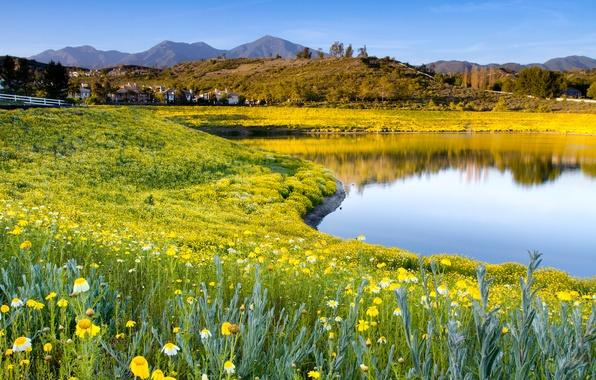 Картинка лето, небо, трава, цветы, природа, озеро