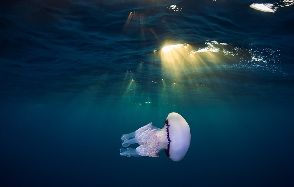 Картинка море, свет, медуза