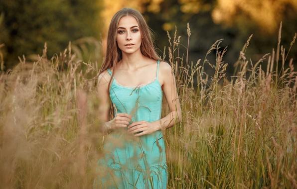 Картинка поле, лето, трава, взгляд, девушка, лицо, улыбка, настроение, милая, нежность, портрет, платье, шатенка, ручки, sexy, …