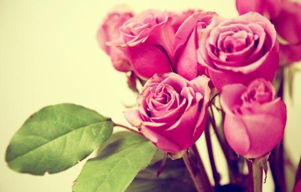 Картинка листья, макро, цветы, розы, букет, лепестки, розовые, бутоны