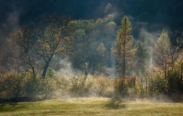Картинка осень, лес, свет, деревья, туман, дымка