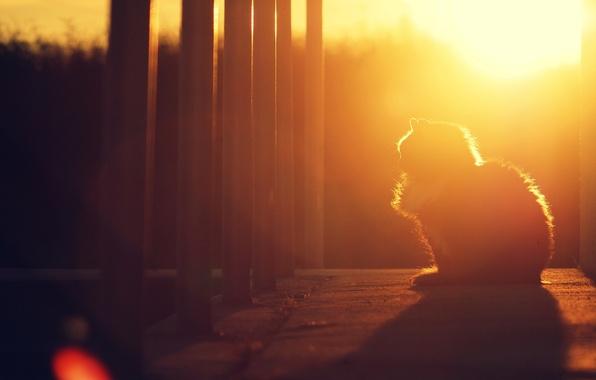 Картинка кошка, кот, солнце, закат, котенок, тень, вечер, сидит
