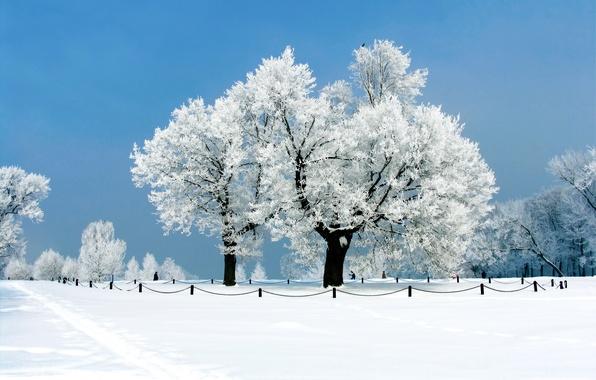 Картинка зима, иней, небо, снег, деревья, парк, ограждение, дорожка, аллея