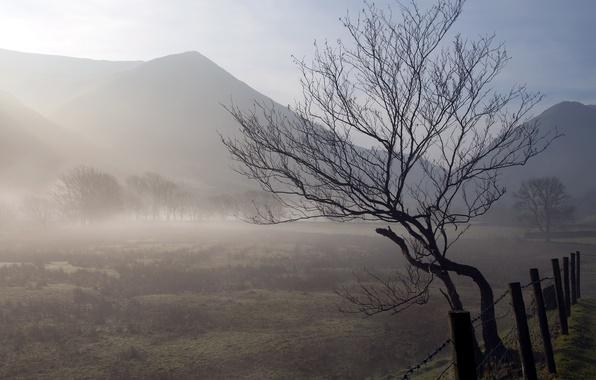 Картинка поле, пейзаж, природа, туман, дерево, забор, утро