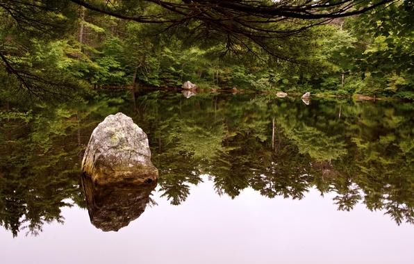 Картинка лес, вода, деревья, пруд, река, камни, nature, rivers, отражение., vater
