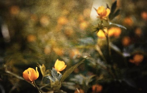Картинка цветы, стиль, фон, текстура