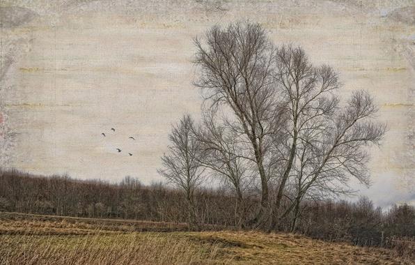 Картинка поле, деревья, стиль, фон