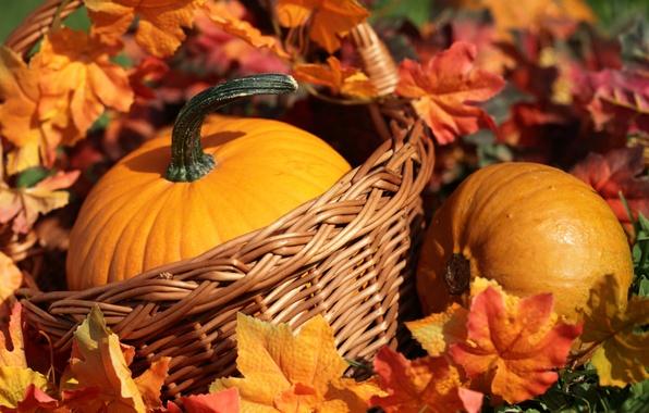 Обои осень, тыква, корзинка, желтые листочки
