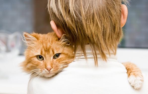 Картинка кошка, дети, глаз, животное, ребенок, мальчик, малыш, волос, eyes, cat, boy, animal, hair, child, children, …