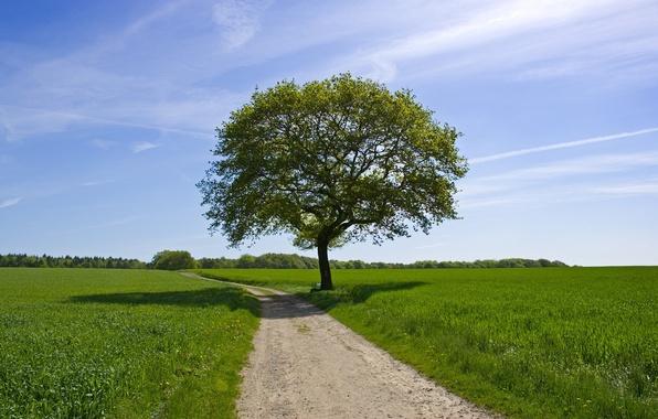 Картинка дорога, зелень, поле, лето, небо, дерево