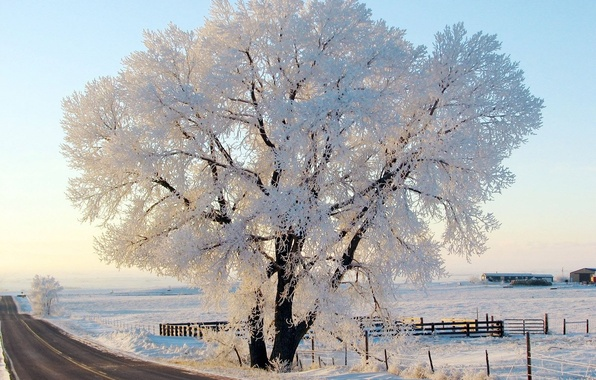 Картинка зима, иней, дорога, небо, природа, дерево