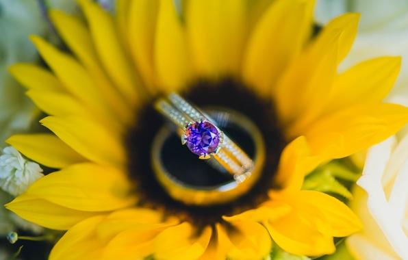 Картинка камень, подсолнух, желтые, лепестки, кольцо