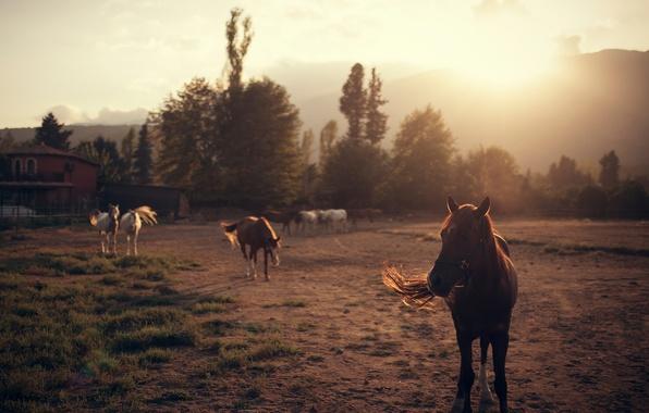 Картинка кони, лошади, Ivan Gorokhov