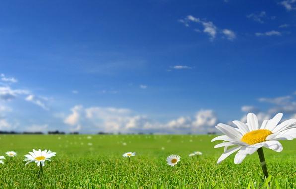 Картинка поле, лето, небо, трава, солнце, цветы, природа, весна