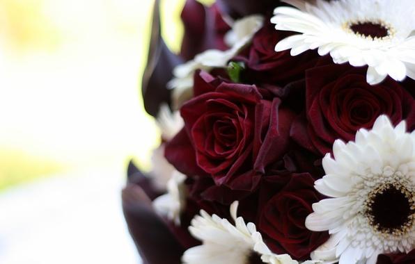 Картинка белый, макро, цветы, розы, букет, герберы, бордовый