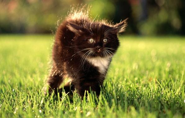 Картинка трава, глаза, взгляд, котенок, удивление, лужайка