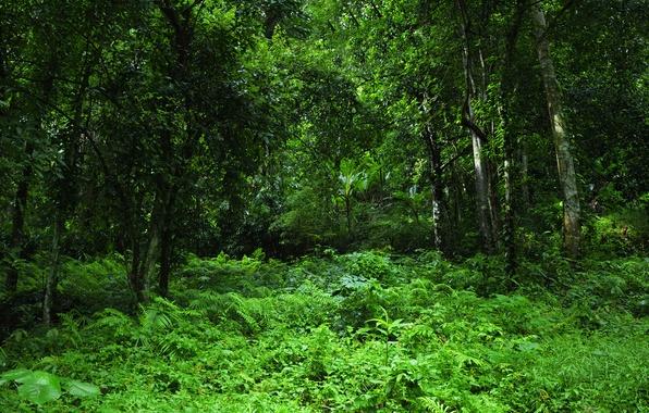 Картинка зелень, лес, трава, деревья, тропики, джунгли, Jungle
