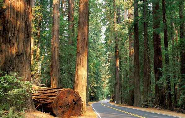 Картинка дорога, лес, деревья, природа, forest, trees road