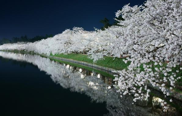 Картинка свет, ночь, пруд, весна, сад, канал, цветение