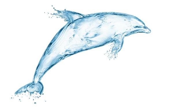 Картинка вода, капли, брызги, дельфин, креатив, рисунок, всплеск, арт, Water, art, splash, drops, drawing, dolphin, creativity