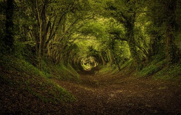 Картинка осень, лес, листья, деревья, путь
