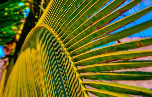 Картинка лето, макро, лист, пальма