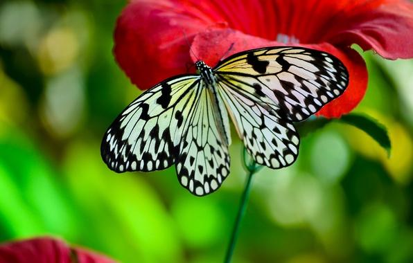 Картинка макро, цветы, насекомые, бабочка