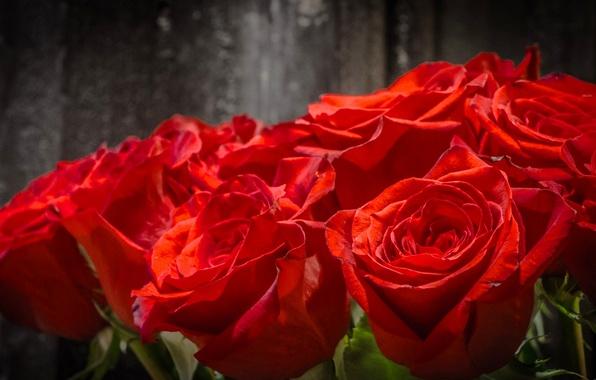 Картинка макро, розы, букет, бутоны