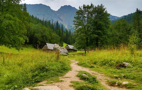 Картинка лес, трава, деревья, горы, камни, Польша, домики, тропинка, Zakopane