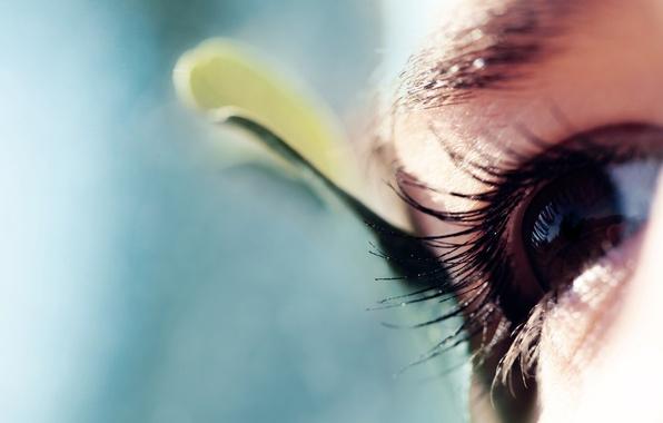 Картинка взгляд, макро, глаз, ресницы
