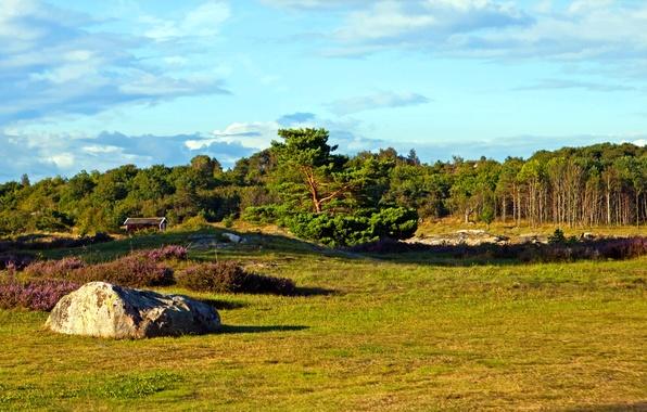 Картинка поле, лес, небо, трава, деревья, камень, домик, Швеция, Вестра-Гёталанд
