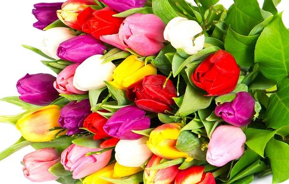 Картинка цветы, яркие, красота, букет, лепестки, фиолетовые, тюльпаны, красные, red, розовые, white, белые, разноцветные, yellow, pink, …