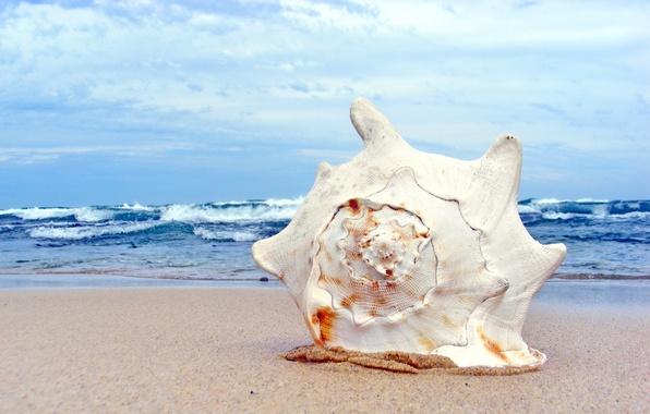 Картинка песок, море, волны, пляж, лето, небо, макро, берег, раковина, ракушка