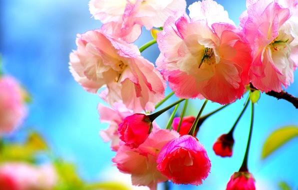 Картинка дерево, ветка, весна, сад