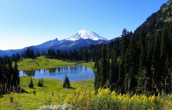Картинка лес, небо, снег, цветы, горы, природа, озеро, ель, склон, луг, вершина