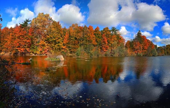 Картинка осень, лес, небо, листья, облака, деревья, озеро, краски, Канада, Онтарио