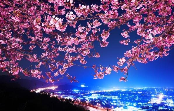 Картинка Сакура, Япония, Ночной город, Shin Mimura, Шоссе, Цветущая вишня
