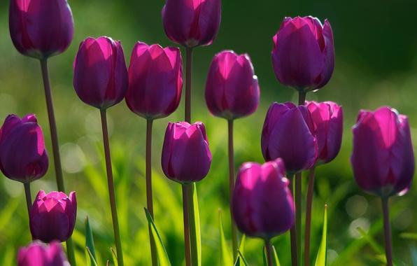 Картинка лес, цветок, лето, трава, свет, цветы, свежесть, парк, растения, весна, утро, сад, тюльпаны, цветение, цветки, …